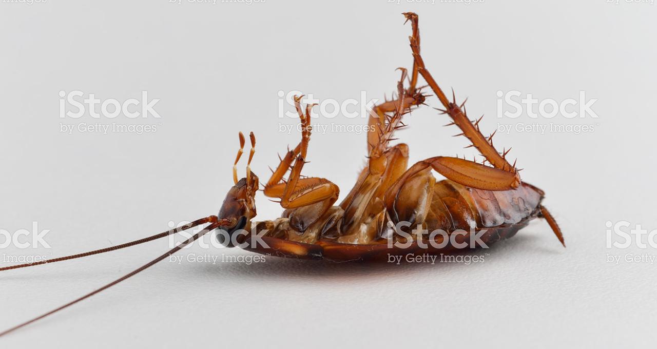 cockroach treatment brisbane